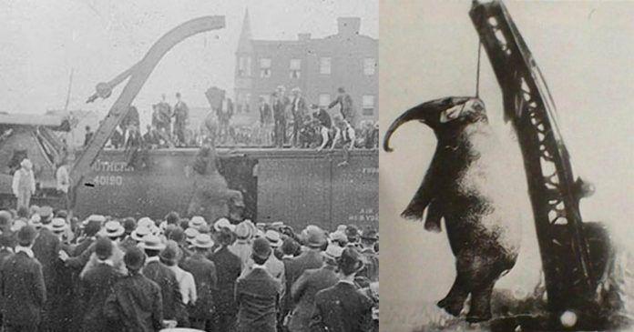 Mary era una elefanta asiática que pertencía al circo Sparks World Famous Shows. Luego de matar a su entrenador, fue colgada en 1916 y se convirtió en un símbolo del maltrato animal de principios del siglo XX.