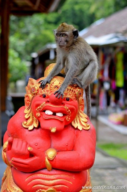 It's a monkey on the back of a monster statue. Well, in truth, it could be another type of monkey. This photo from the www.cuteinasia.com web site was taken at the Monkey Temple in Bali, Indonesia.