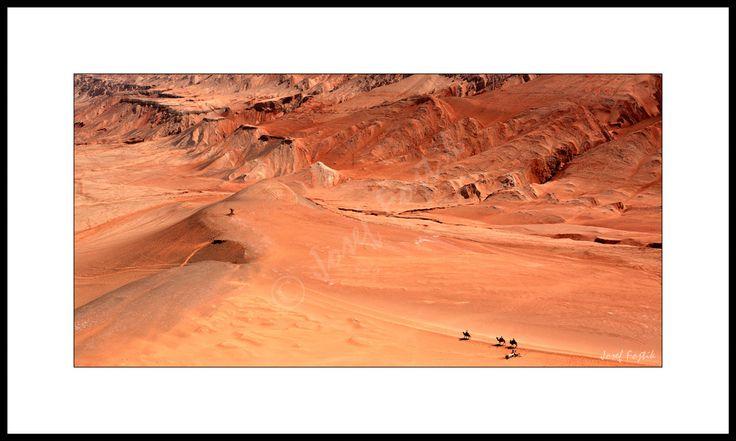 Fotoobraz - Velbloudi v poušti Taklamakan u města Turfan, Sin-ťiang, Čína. Foto: Josef Fojtík - www.fotoobrazarna.cz