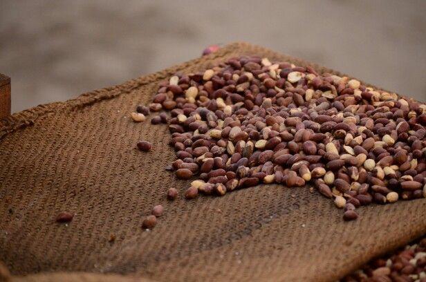 Roasted groundnuts !! A handful for winters .. #food #Punjabi foodie