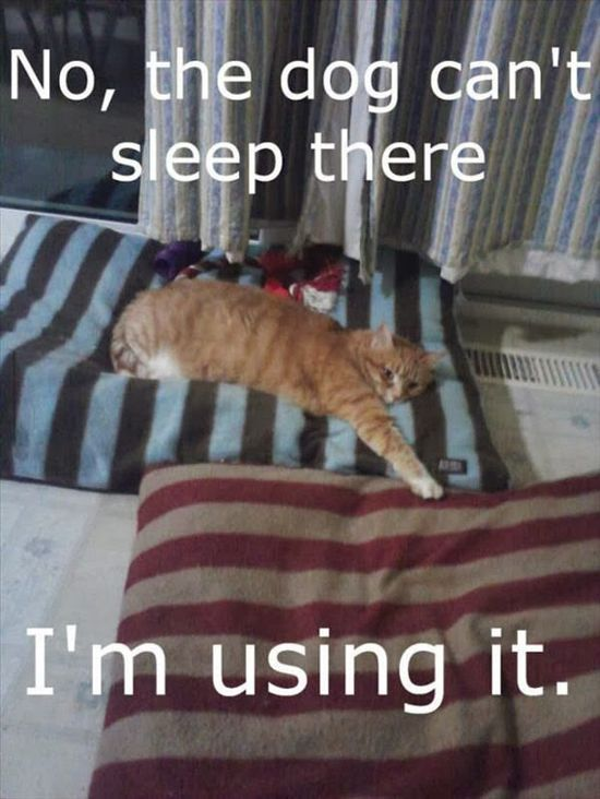 Funny Cat Pictures | OUR PETS (group board) | Pinterest | Cat, Animal and Funny animal