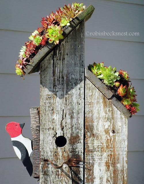 An easy way to make a sedum roofed birdhouse