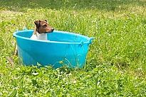 Dog Park Agrinaviglio, un parco per i nostri amici a 4 zampe all'interno dell'Agricola Agrinaviglio. Area addestramento, allenamento e sgambamento cani