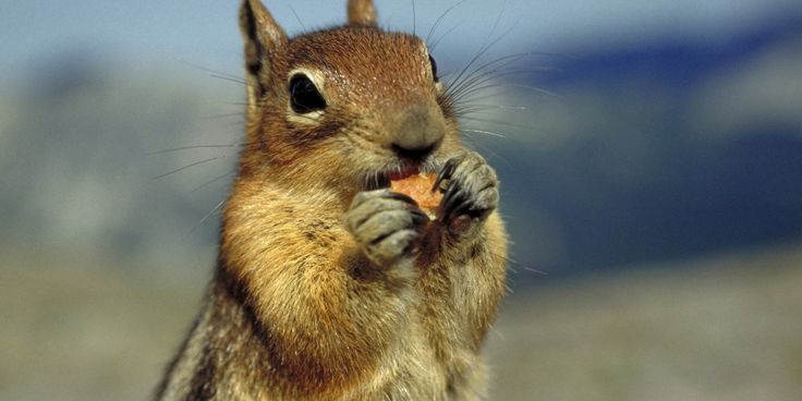 Watch This Dad Use A Live Squirrel To Pull His Daughter's Tooth