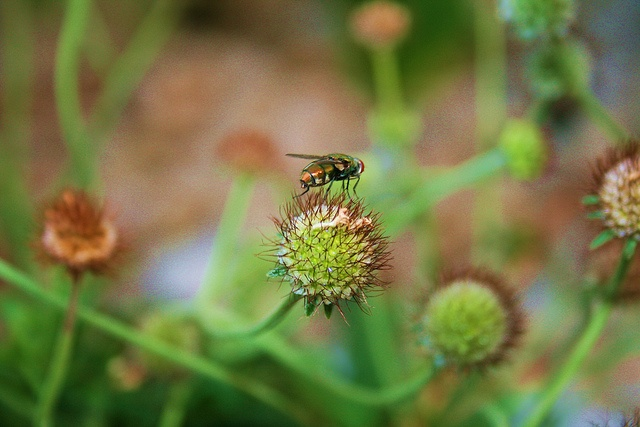 Close up by Jessolomew, via Flickr