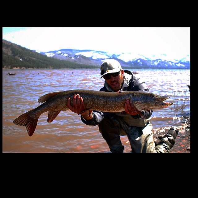21 best images about valletcio camping on pinterest for Best trout fishing in colorado