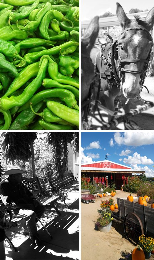 Sutherland Farms Green Chile Festival - Southwest Discovered - New Mexico