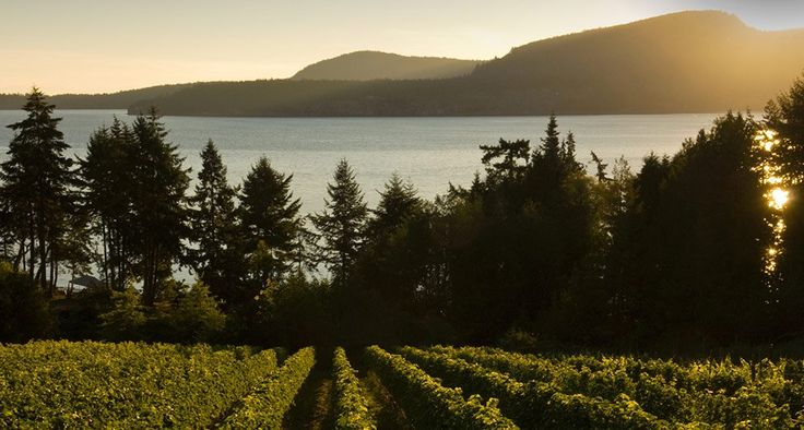 Wineries & Vineyards | Vancouver Island, BC | Destination BC - Official Site