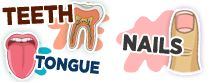TEETH TONGUE NAILS How the Body Works @ KidsHealth.org
