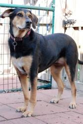 GRACIE~. Spayed, Housebroken, Up to date shots.  I've been FORGOTTEN!  I'm a rescue from Hurricane Ike IN 2008! I'm not as urgent as some, BUT, I've been living in a KENNEL FOR 5 YEARS NOW. I'm not getting younger. I'm a big dog in a small dog rescue. I WANT A HOME!!!! PLEASE take me home. You can see me at tinypawsrescue.com