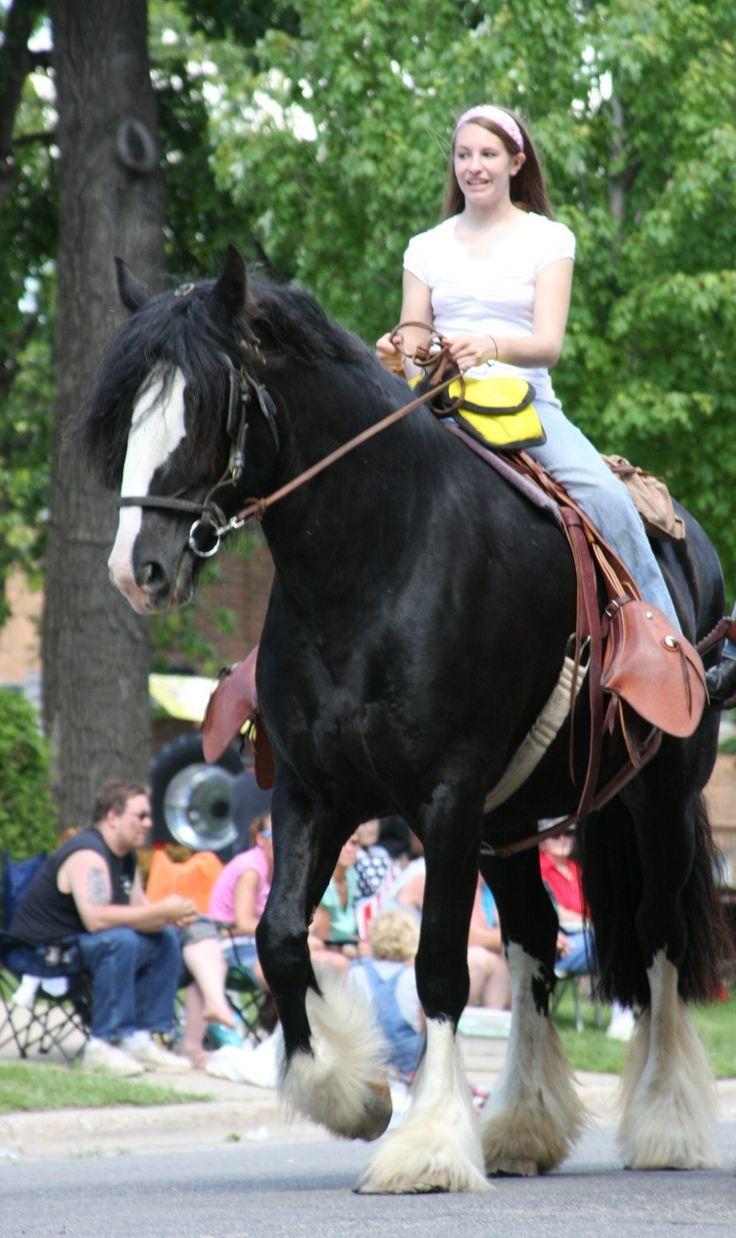 Parade horses.