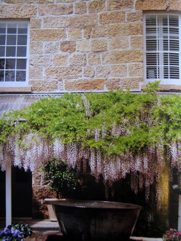 Wisteria over vessel; Red Feather Inn, Tasmania