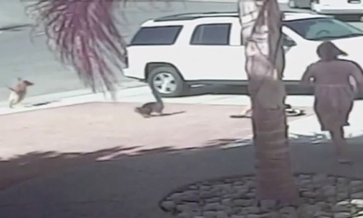cat saves boy from dog attack!! Cat of the year!! The boy is okay thanks to his fuzzy friend!!