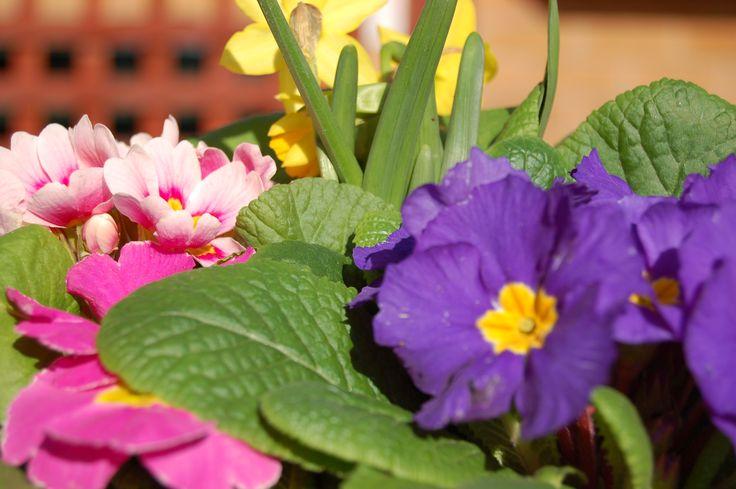 Sprawdź aktualne trendy florystyczne www.florysta3d.pl