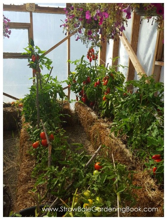 Straw Bale Garden Setup In A Greenhouse