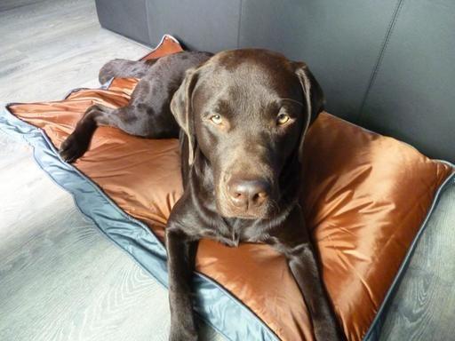 Hunde-Outdoorkissen 105 x 67 cm (Lassie), braun, wasserdicht und robust