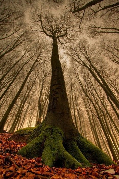 ✮ Awesome photo by Leszek Paradowski   The Beech with a Human Face - you really should blow it up and look at the trunk.