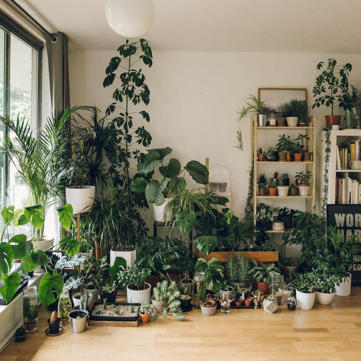 Plants Inside Rooms: House Plant Care, Plant Decor, Room