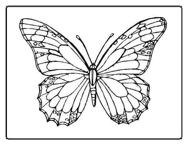 Free Butterfly Printable Butterfly Outline Butterfly Coloring
