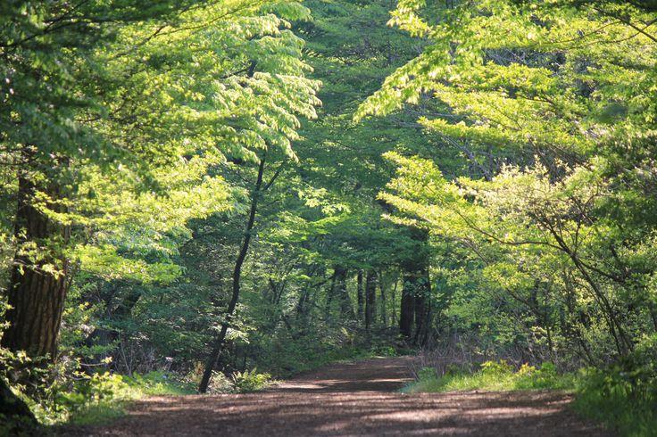 제주도 자연이  아름다운 사려니숲 피톤치드향이 머리를 맑게 합니다.