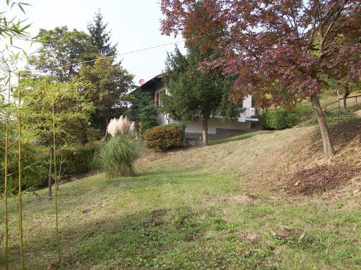 Oltre 25 fantastiche idee su erba delle pampas su for Erba della pampas riproduzione