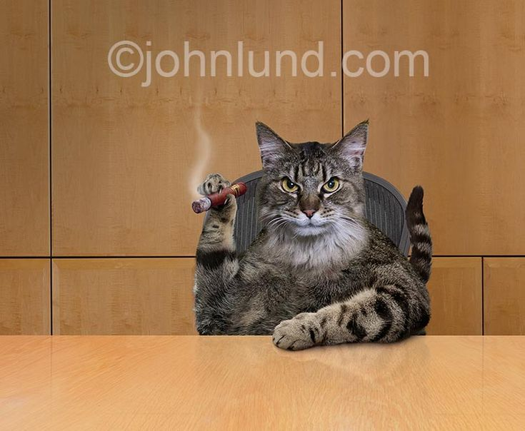 A Fat Cat Smokes A Cigar In A Corporate Board Room In This
