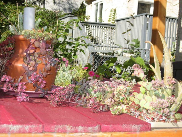 The succulent table on Sept 11.
