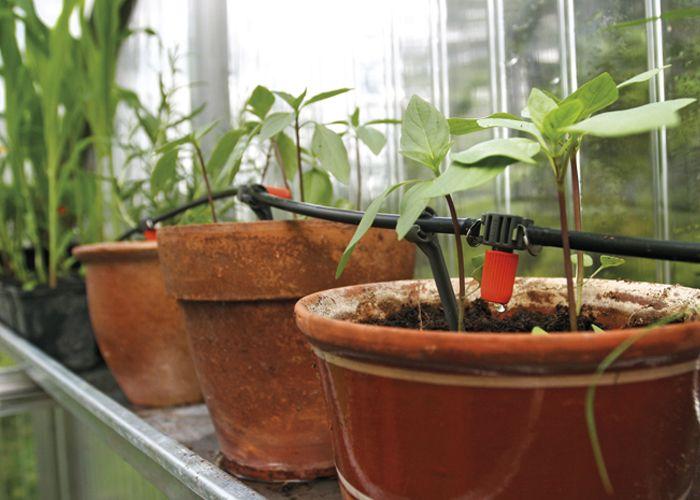 Kastelujärjestelmän hankinta ja suunnittelu voi olla järkevää, jos haluaa vähentää omaa työtaakkaansa tai kasvattaa isompaa määrää kasveja kasvihuoneessa. www.kotipuutarha.fi