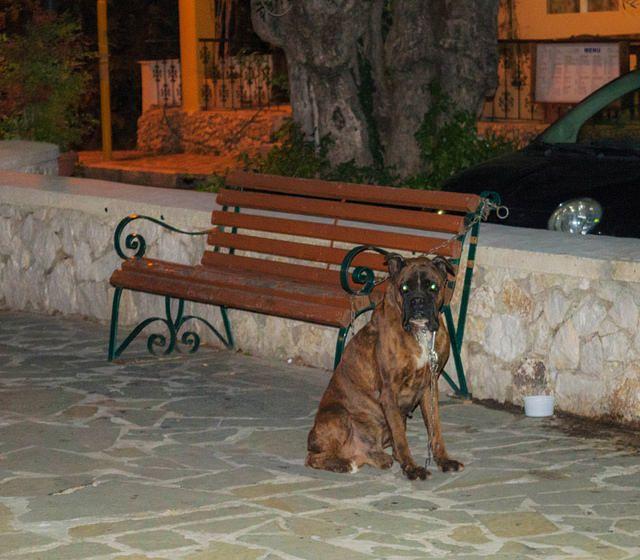 Αναζητείται ο ιδιοκτήτης σκύλου ράτσας Mπόξερ που βρέθηκε σήμερα στη Ψίνθο