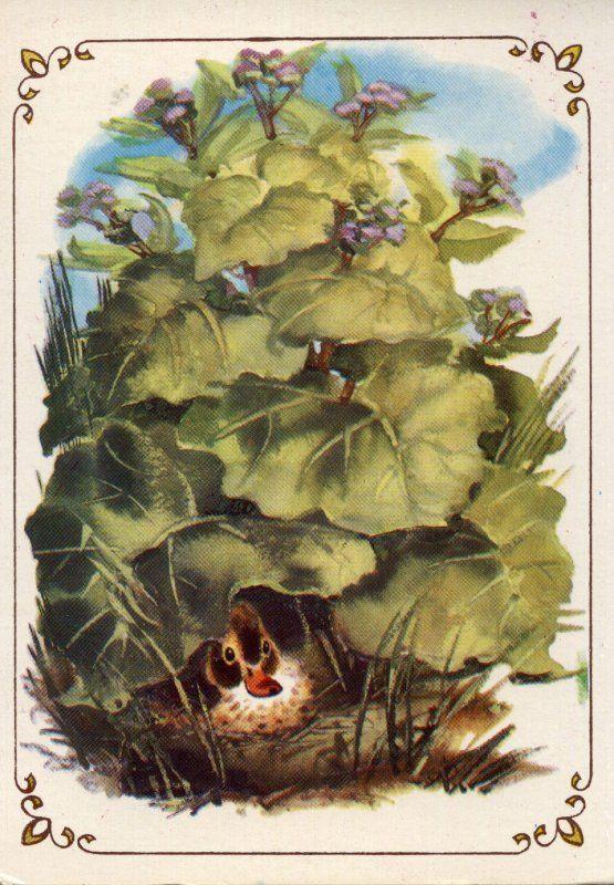 В чаще лопуха было глухо и дико, как в самом густом лесу, и вот там-то сидела на яйцах утка. Сидела она уже давно, и ей это порядком надоело. К тому же ее редко навещали: другим уткам больше нравилось плавать по канавкам, чем сидеть в лопухах да крякать с нею.