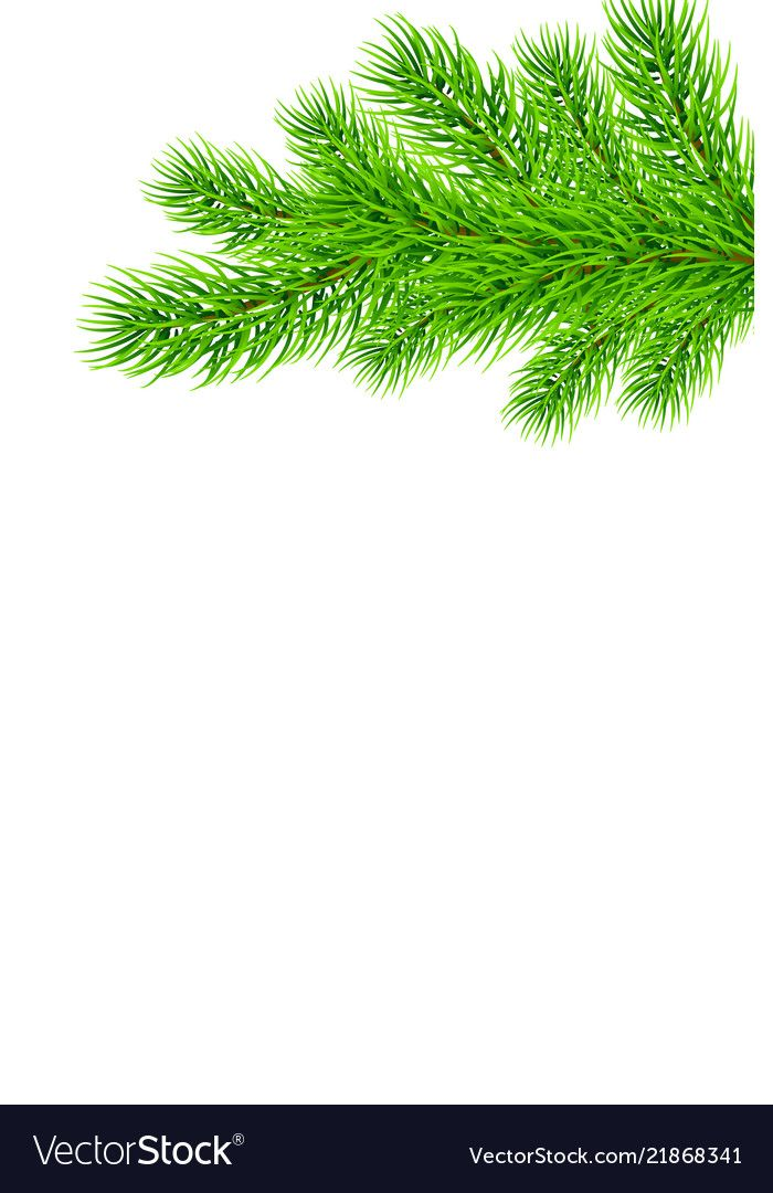 Fir Tree Branches Background Tree Photoshop Family Tree Poster Tree Wallpaper