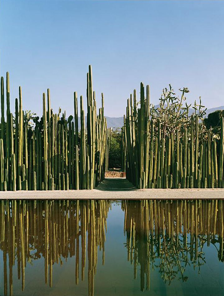 Mexican Fence Post Cactus - Lining a garden path to the pool. Loving the desert landscaping.