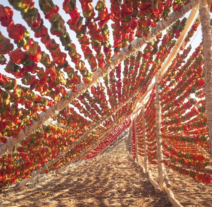 Sun dried peppers in Oguzeli, Gaziantep. Photo taken by Eric Wolfinger, while on our culinary trip to Turkey