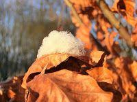 WWW Wiersze Wycieczki Wspomnienia: Haiku o zimie: Pierwszy mróz