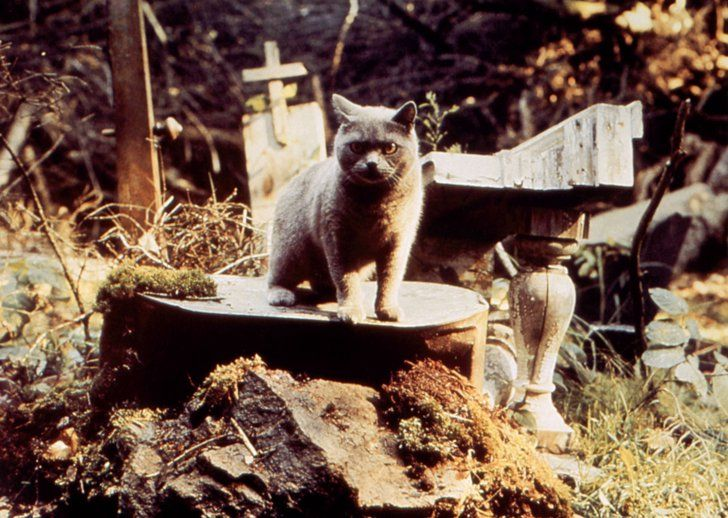 Pin for Later: 18 of Your Favorite Horror Movies That Actually Got Terrible Reviews Pet Sematary
