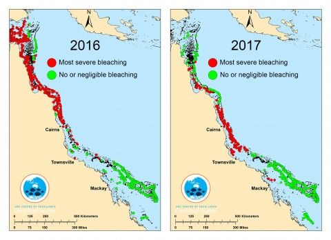 For the second year in a row, severe coral bleaching has struck the Great Barrier Reef.