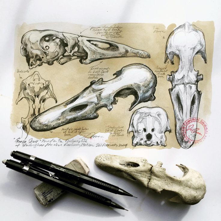 'Goose Skull' Drawing Artist / Duncan Cameron / UK www.duncancameron.org  See Instagram for more:  https://www.instagram.com/brokensharkcage