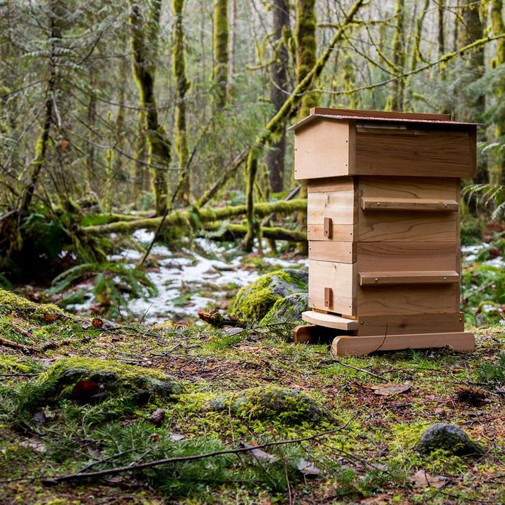 23 Best Bee Hives Images On Pinterest Bees Bee Hives