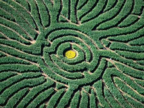 1000 Images About Mazes And Hedge Gardens On Pinterest Maze Fisher And Gardens