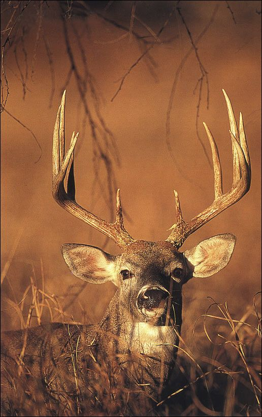 entry (face) and exit (antlers) points