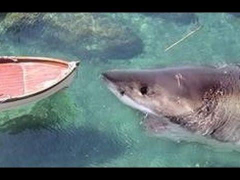 Real Megalodon Proof! Biggest Shark Ever - Megalodon is ...