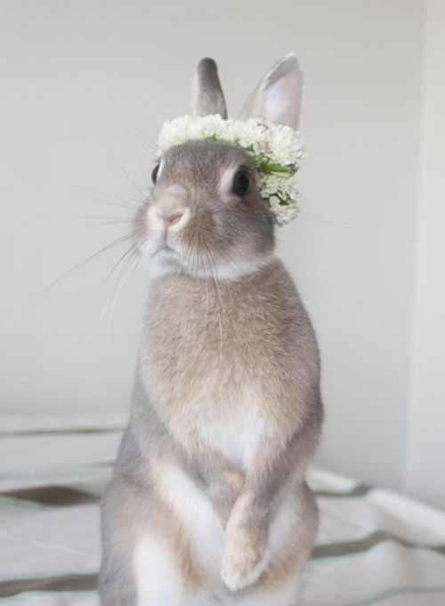 A floral crown. On a bunny. Act natural. Everyone loves summer. #floralcrown #summersolstice