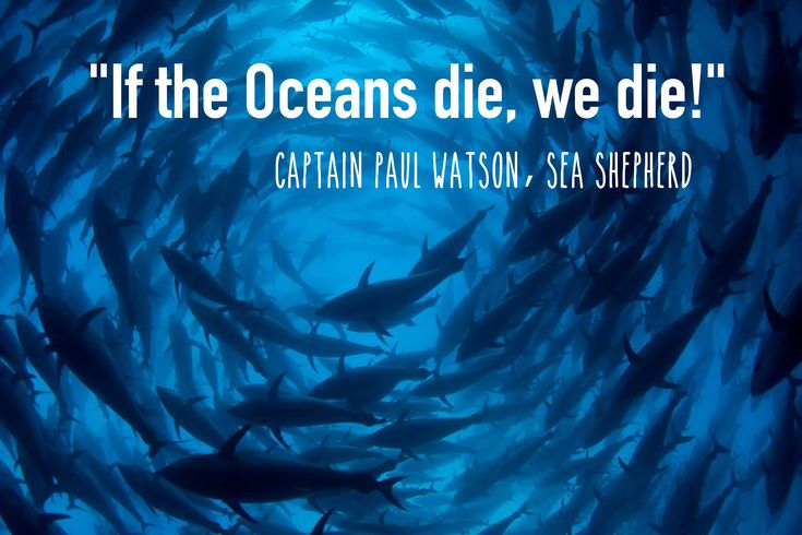 Beyond Whale Wars: Inside Sea Shepherd's Global Movement Defending Diversity in the Oceans. http://www.onegreenplanet.org/animalsandnature/sea-shepherd-a-global-movement-defending-diversity-in-the-oceans/ #SeaShepherd #defendconserveprotect