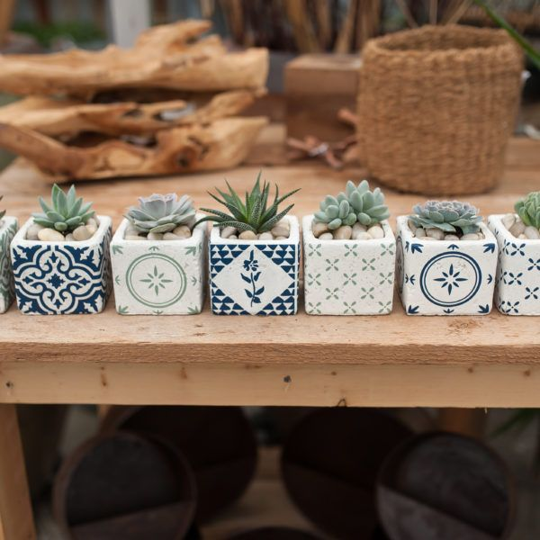 Succulent Lovers –  West Coast Gardens, Surrey, BC – We grow all our own succule…