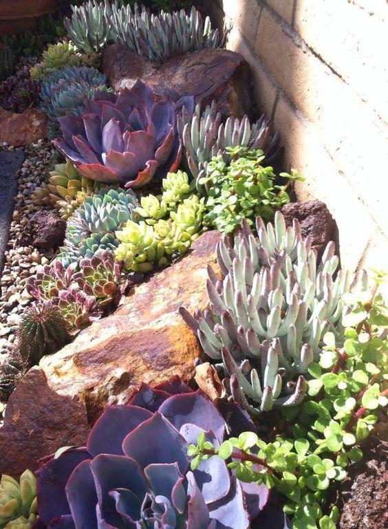 mmmm... #succulent #landscape by 26 Blooms Succulent Landscape and Design https://fbcdn-sphotos-h-a.akamaihd.net/hphotos-ak-xpf1/v/t1.0-9/11081145_806573126095576_2677846221367082205_n.jpg?oh=352cc0597a01bf1cc1df32df39ec7dc5&oe=55ABB76B&__gda__=1436440577_6672b3c528590487630d232a07261557