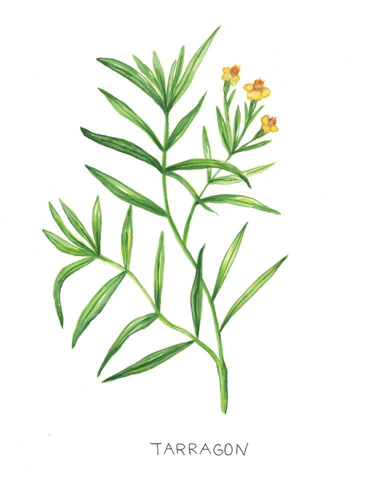 Botanical Illustrations Jessica Pena In 2021 Illustration Botanical Illustration Botanical