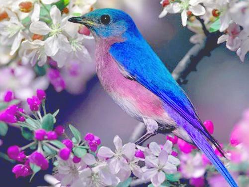 Gorgeous Bird ~ Gorgeous Picture