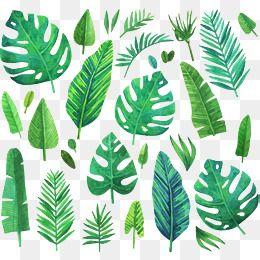 Aquarela Verde plantas coníferas, Vector De Material, Plantas Coníferas, Planta VerdePNG e Vector