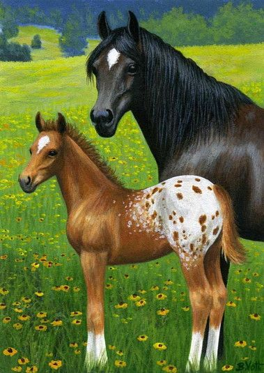 A COLOURFUL SPRING......this black mare is very proud of her appy foal as enjoy the spring pasture