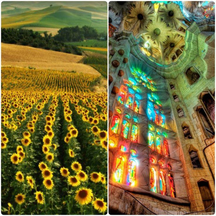 #inspiratie din #natura #gaudi #sunflowers
